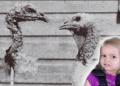5 Eksperimen Merepek yang Entah Kenapa Dibuat Oleh Saintis